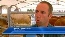 D!CI TV : Des bovins reproducteurs made in Hautes-Alpes à Chorges ce samedi