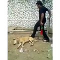 opps this man is crazy and the dog is so exited - funny videos