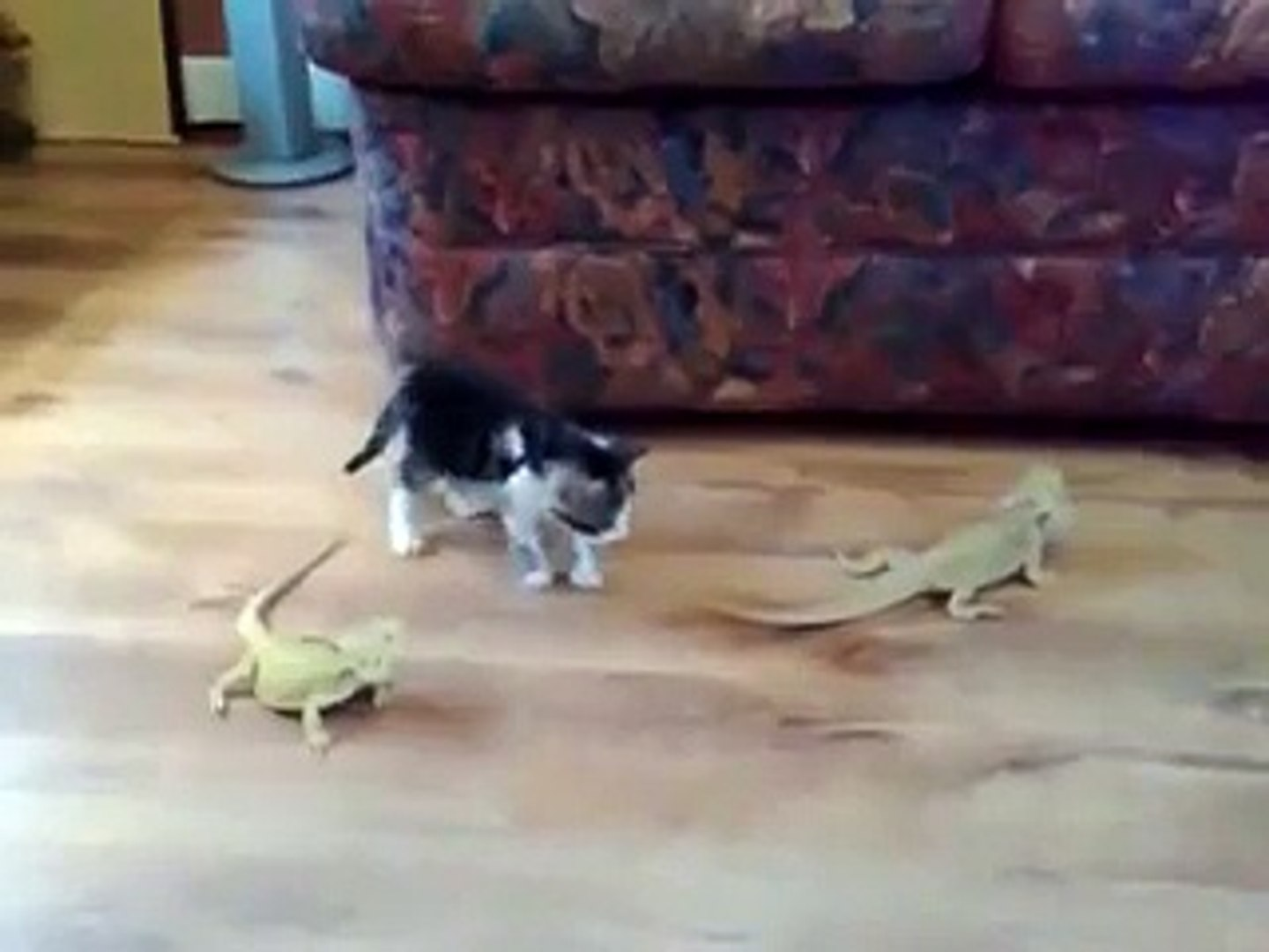 Pet Lizards Surprised Pet Cat At Home. the fight of each other going to viral on social media.