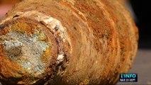 Inédit : Un obus de la Seconde Guerre découvert au Mans