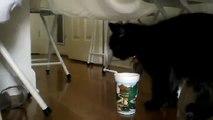 chat drôle de drôle fun à regarder!
