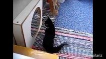 Funny fun with cats and mirrors rzhachnaya collection of jokes Fun to watch!