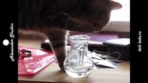 Funny fun with cats true British cat drinks water Fun to watch!