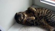 Cat Cat jure amusant oiseau-Look!
