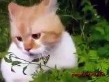Les médicaments chat de chat fun tenir et voir!