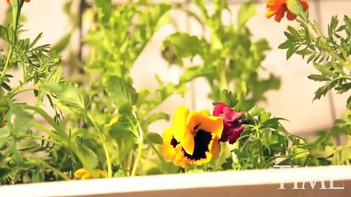Aquaponics in High Schools. TIME Magazine Video 2010 – With Max Meyers