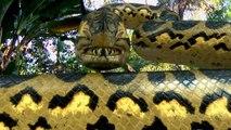 VIDEOBUSTER.de zeigt PIRANHACONDA - Anaconda und Piranha! de