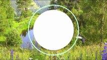 Le système d'irrigation ingénieux de permaculture de Josef Holzer - FUTUREMAG- ARTE