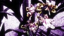 Dance in the Vampire Bund • Bande Annonce HD