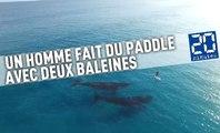 Un homme fait du paddle avec deux baleines