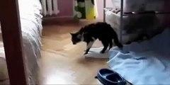 Cat Cats sont amusants saut très amusant! Regardez!