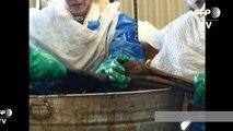 Marée noire du golfe du Mexique: BP va payer $20,8 milliards