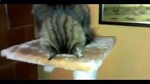 Cat regarder la boxe à la télévision remplit grèves et autre chat amusant