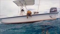Un chien joue et nage avec des dauphins!