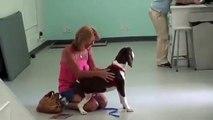Elle va chercher son chien paralysé à la clinique et surprise