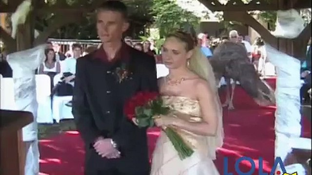 Ostrich lays egg in middle of wedding ceremony