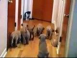 Chien contre chat sait qui va gagner