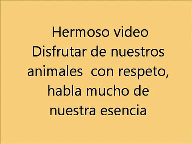 Increible Perro Obedece a su Dueño Ladrando Alto o Bajito 2014 HD | Videos Sorprendentes H