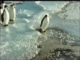 Funny pinguin video- pinguin sinks watch Most Animal Funny video 2015