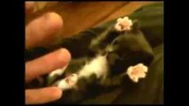 Most cute kitten getting tickled.. ever!