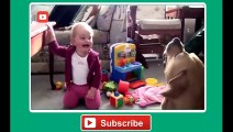 Babies Laughing at Funny Pets - Baby Laughing at Funniest Animals Compilation 2014