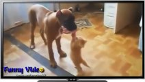 Best Funny Cats Fails Compilation Part 2   Funny Cat Videos 2015 - Funny Pets, Funny Animals