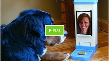New Invention - iCPooch -- Internet Pet Treat Delivery & Video Chat