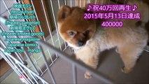 図書館戦争 THE LAST MISSION 劇場限定グッズ Theater limited goods 2015.10.10.