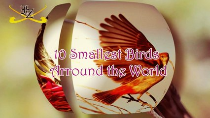 10 Smallest Birds In The World