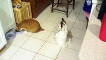 Un Chien regarde un Chat lui Dévorer toute sa Nourriture