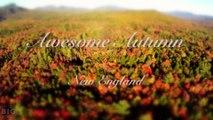 Awesome Autumn (Time Lapse - Aerial - Tilt Shift - 4k)