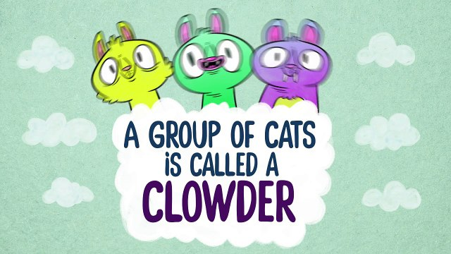 9 Mind Blowing Cat Facts