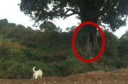 Real ghost Videos | Real Ghost Caught on Camera | Ghost Under Tree | Scary Ghost Videos