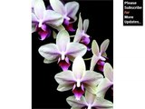 white and pink orchid flowers | orchid flower set of image collection