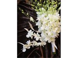white orchid flower bouquet | beautiful orchid Flower image ideas