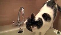 Cute cat drinking tap water besta