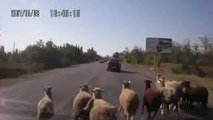 Why We Love Russia, Crazy Russian Drivers, Only In Rucciya :)