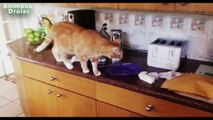 Chats drôles vs Toasters Chats Tu penses Toaster Compilation 2015 [NOUVEAU HD VIDEO]