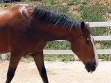 Questo cavallo si diverte un mondo ma... non stategli vicino!