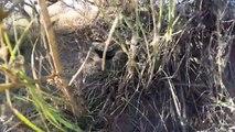 Une GoPro tombe dans un nid de serpents à sonnette