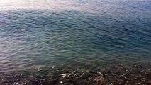 Bonjour Paris - Best Classic French Songs ( Les grandes chansons françaises ) keep the big fish - sea - lake