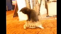 Best Funny Cats Fails Compilation   Funny Cat Videos 2015 - Funny Pets, Funny Animals