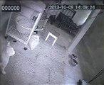 New videos in www.mycats.ir