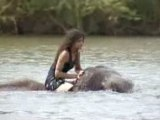 Naissance d'un éléphant, naissance...