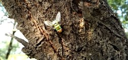 Amazing Beautiful & Colorful Green & Yellow Housefly - Birds Planet - Nature Documentary HD