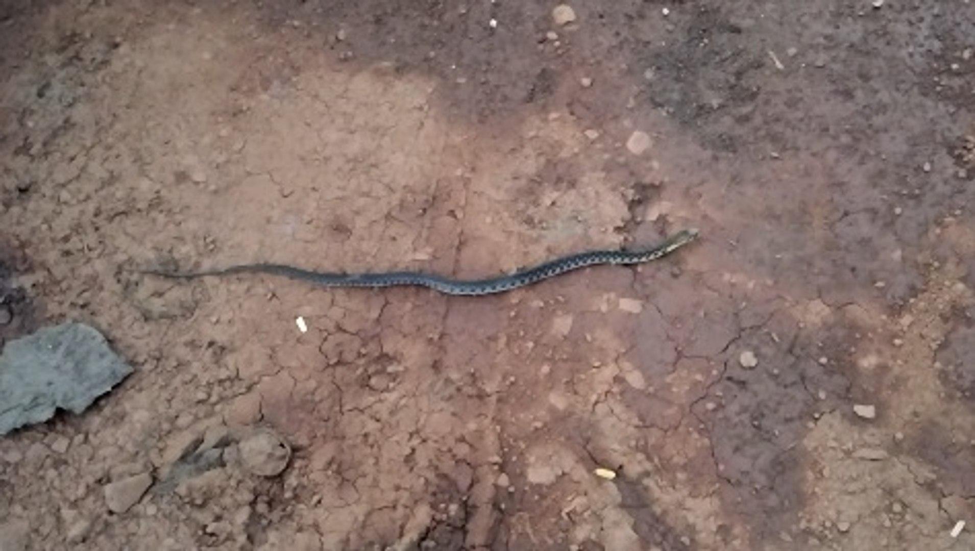 Beautiful Baby Snake - Wild Animal - Animal Planet - Nature Documentary HD