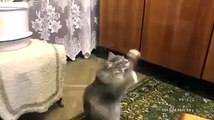Funny Cat Videos - Russian cat dances while his human sings