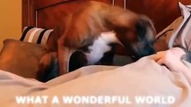 Dogs Waking Up Their Owners Compilation 2015 | Dogs VS Owners | Funny Dogs | Cute Dogs