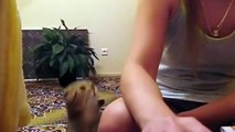 Cute Cats Demands Petting Compilation - Funny Cats