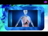 Breast Augmentation - Breast anatomy